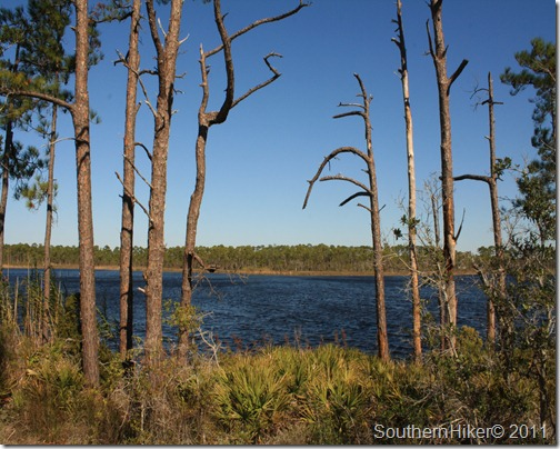 Pine Beach Trail–Gator Lake Trail, Bon Secour National Wildlife Refuge