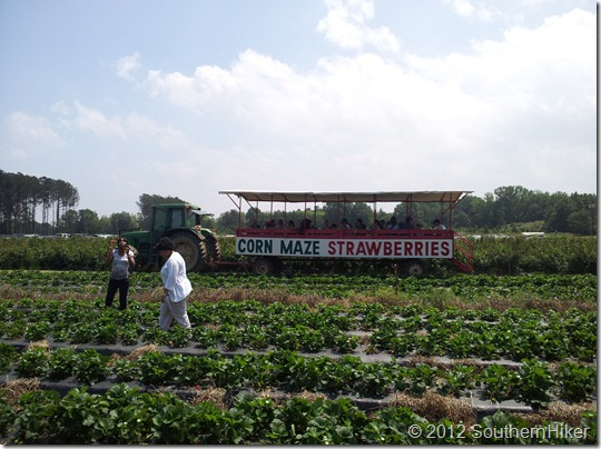 Washington Farms Strawberry Festival–Watkinsville, Georgia